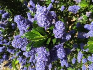 http://qigongeetong.fr/wp-content/uploads/2012/10/2015.05.19-abeilles-qigong-à-Galliera.jpg